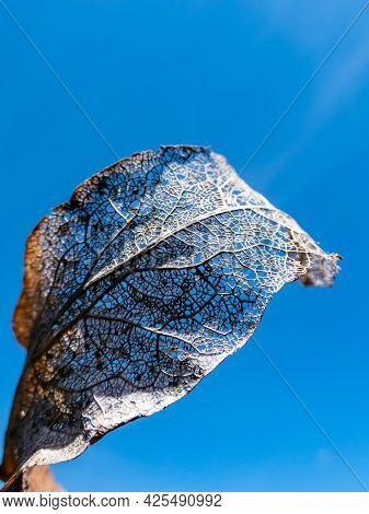 Macro Shot Of Dried, Brown And White Leaf With Visible Texture, Veins And Pattern Of Leaf Surface An