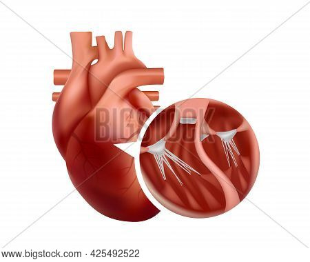 Realistic Heart Anatomy With Close-up Cross-section. 3d Human Heart Illustration.