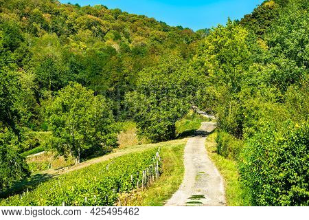 Vineyards Near Chateau Chalon In The Jura Department In Bourgogne-franche-comte, France