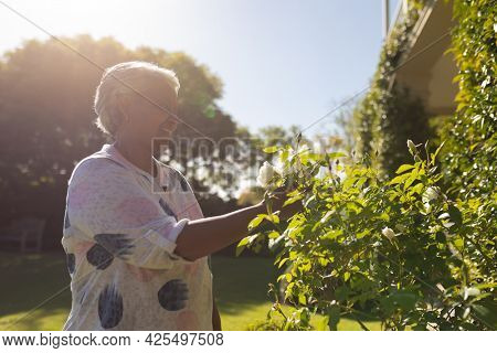 Senior african american woman touching plants in sunny garden. retreat, retirement and happy senior lifestyle concept.