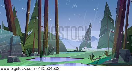 Forest At Raining Day Scenery Landscape. Tranquil Nature With Fir-trees, Rocks And Rain Drops, Puddl