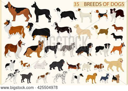 Set Of Dogs Of Different Breeds On A Light Background. Pets.