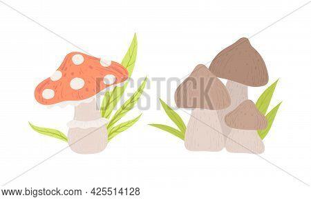 Edible And Poisonous Mushrooms, Amanita And Shiitake Mushroom Cartoon Vector Illustration