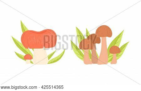 Set Of Wild Forest Edible Mushrooms Growing In Grass In Nature Cartoon Vector Illustration