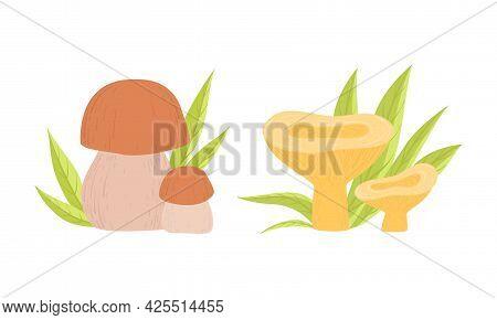 Wild Forest Edible Mushrooms Set, Boletus And Chanterelle Cartoon Vector Illustration