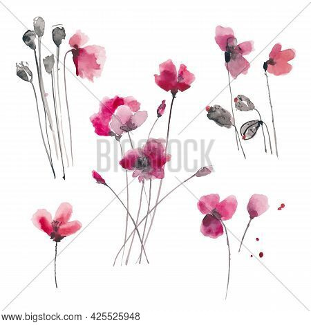 Hand Drawn Ink And Watercolor Vector Illustration: Red Poppies Flowers And Buds On White Background