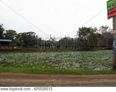Anuradhapura, Sri Lanka - 05 Jan 2011: The Park In Anuradhapura, Sri Lanka