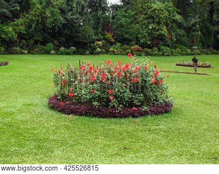 Kandy, Sri Lanka - 07 Jan 2011: Flowers In Royal Botanical Gardens, Kandy, Sri Lanka
