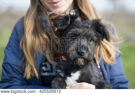Portrait Of A Black Puppy. Woman Holding The Animal In Her Arms. Portrait Of A Young Black Dog Close