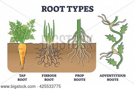 Root Types Examples In Soil From Side View In Biological Outline Diagram. Tap, Fibrous, Prop Or Adve