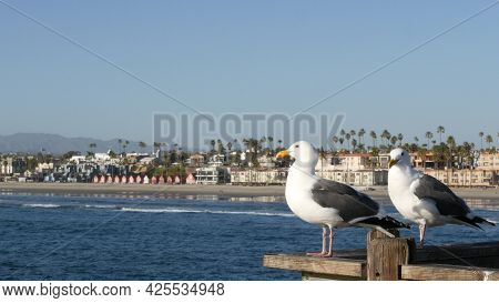 Seagull On Wooden Pier Railings. Bird Close Up And Palm Trees In Oceanside. California Waterfront Pa