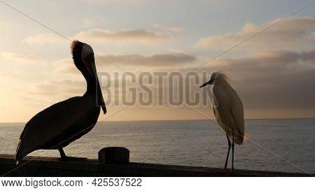 Wild Pelican On Wooden Pier Railing, Oceanside Boardwalk, California Ocean Beach, Usa Wildlife. Big