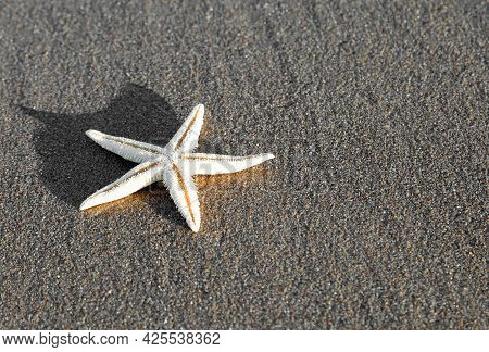 Large White Starfish On The Sand In The Shore