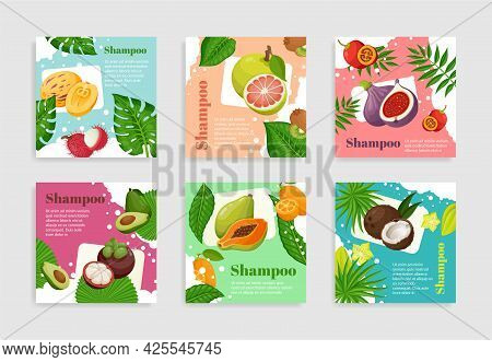 Collection Fruits Organic Shampoo Package Label Vector Flat Illustration Haircare Cosmetics Product