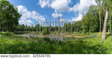 A Panorama Landscape Of Moorland And Water In The Middle Of A Green Summer Forest Under A Blue Sky W