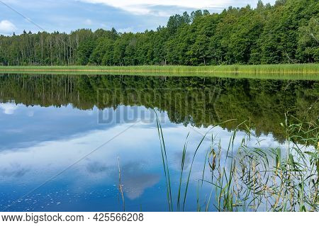 Landscape A Beautiful Pond. Forest Natural Pond. Lake Or Fishing Pond.