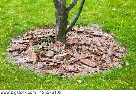 Mulch From The Bark Of Tree Around The Growing Tree Trunk Bushes On Green Lawn, Landscaping Of Growt