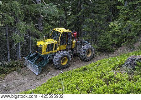 Tree Logging In Ziar Valley, National Park Western Tatras, Slovak Republic. Deforestation Theme. Sea