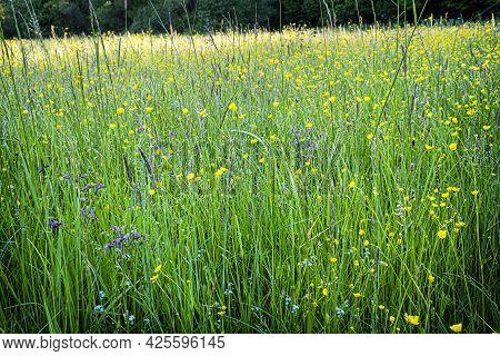 Meadow Scene, Poloniny Mountains, Slovak Republic. Hiking Theme. Seasonal Natural Scene.