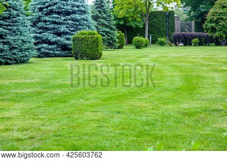 Coniferous Trees On A Lawn With A Lawn And A Trimmed Bush In A Park With Deciduous Trees, Summer Gre