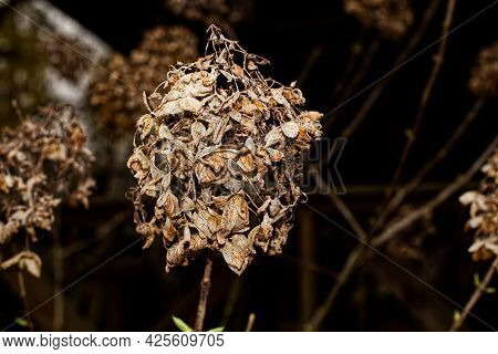 A Rotted Brown Dead Flower Plant In The Fall In Rural Georgia Background Texture
