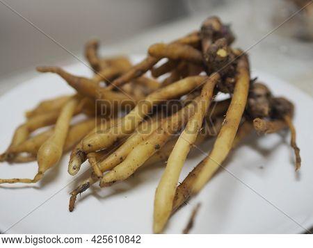 Boesenbergia Rotunda Kaempferia Cochinchinensis Gagnep. Kaempferia Ovata Roscoe, Kaempferia Pandurat