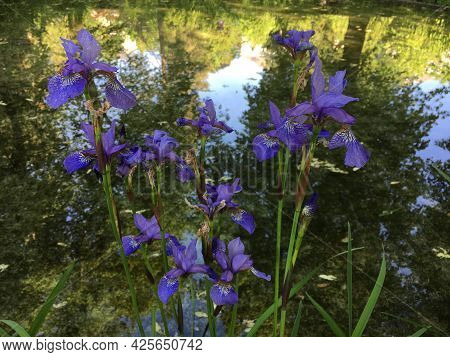 Flowers And Botanical Details At Feldli Cemetery In Saint Gallen (blumen Und Botanische Details Auf