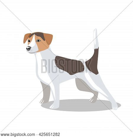Cute Dog Of The Jack Russell Terrier Breed, Isolated On A White Background. Favorite Pets. Vector Fl