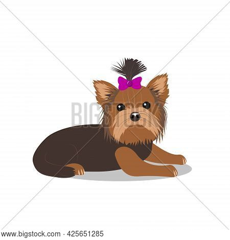 A Small Dog Of The Yorkshire Terrier Breed With A Bow, Isolated On A White Background. Favorite Pets