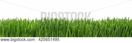 Panoramic View Of Fresh Grass Isolated On White Background