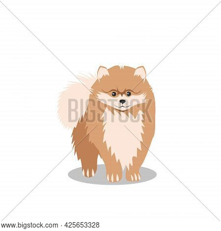A Small Fluffy Dog Of The Pomeranian Breed, Isolated On A White Background. Favorite Pets