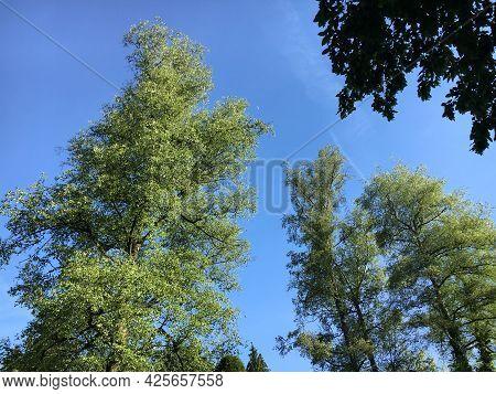 Treetops In The Park At Feldli Cemetery In Saint Gallen (baumkronen Im Park Auf Dem Friedhof Feldli