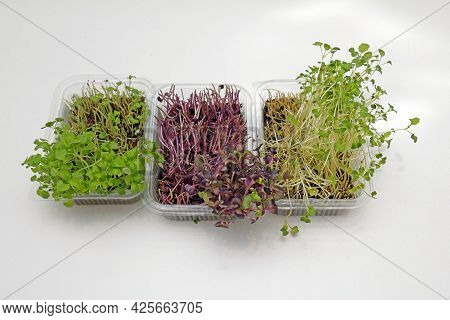 Microgreens Plants Sprouts Growing In Plastic Containers Cut On The Top