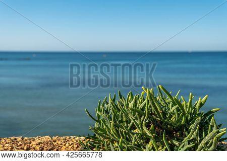 Close-up Of The Mediterranean Sea Fennel Plant, Crithmum Maritimum, With The Mediterranean Sea Out O
