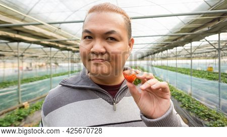 Man Holding Strawberry  In Hand. Man Holding Strawberries From The Garden. Happy Farmer Working With
