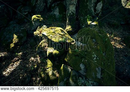 Rays of light play on mossy stones in the forest.