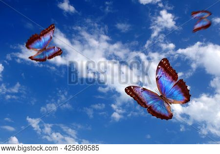 Bright Butterflies Flying In The Blue Sky With Clouds. Flying Blue Butterflies. Colorful Morpho Butt