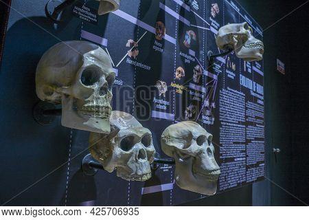 Lampang, Thailand - Feb 24, 2021: Fossil And Human Skull Of Evolution Of Human At Lampang Fossil Geo