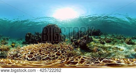Tropical Fishes And Coral Reef Underwater. Hard And Soft Corals, Underwater Landscape. Philippines.