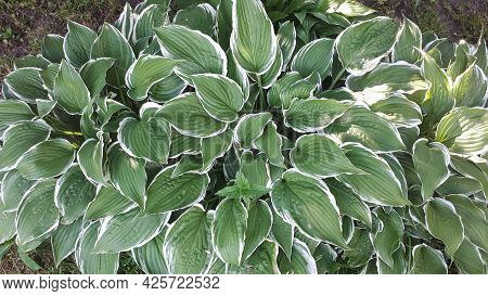 Green Leaves Background. Eco Wallpaper, Foliage Background. Outdoor Leaf Texture Pattern