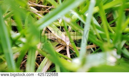 Green Grass In Meadow Pasture With Blur Effect. Macro Nature Textured Abstract Background