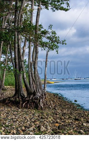Exposed Roots Along A Rocky Shoreline In Atlantic Highlands Nj.
