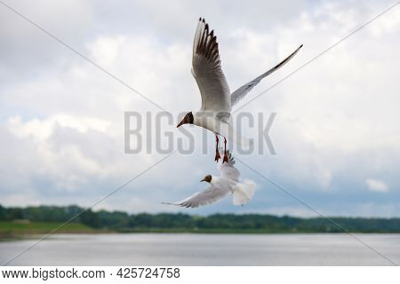 Seagulls Fly Over The Gulf Of Finland In St. Petersburg