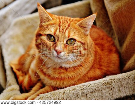 Cat Pictures, Cat Eyes, Pictures Of The Most Beautiful Cat, Cute Cat