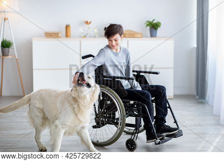 Impaired Teenage Boy In Wheelchair Petting His Dog At Home, Full Length Portrait. Animal-assisted Th