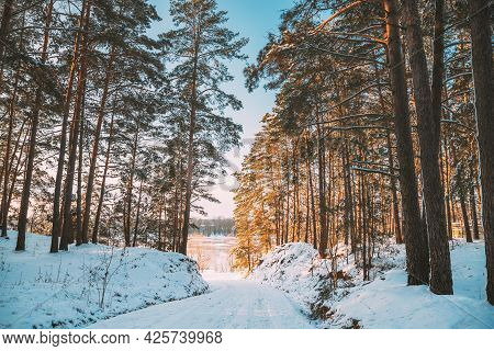 Country Road Through Snowy Winter Pine Forest. Winter Snowy Coniferous Forest Landscape. Beautiful W