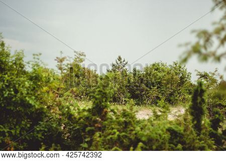 Beautiful Landscape With Green Bushes Under A Cloudy Sky On A Warm Summer Day.