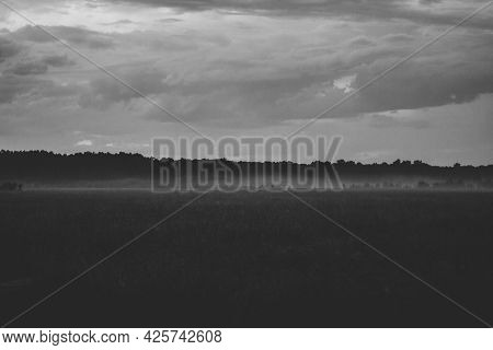 Monochrome Beautiful Summer Landscape With A Grass Field Covered With Fog. Forest On The Horizon In