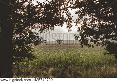 Beautiful Summer Landscape Overlooking Through Tree Branches To A Meadow With Green Grass And In The