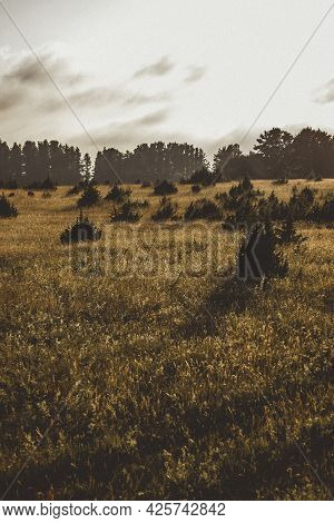 Beautiful Meadow At Sunset With Golden Grass Stalks And Bush Silhouettes In It.